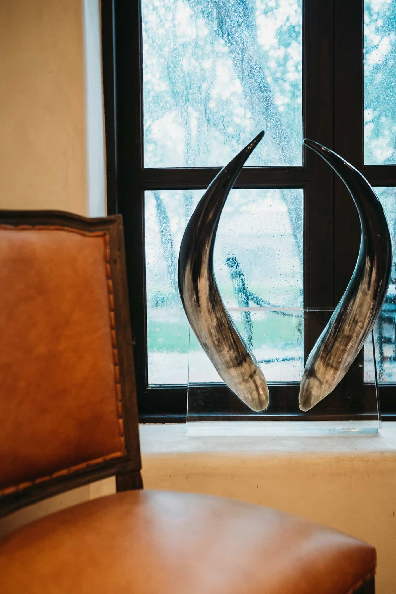 Horns on Lucite - Wall art